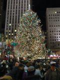 NY Tree